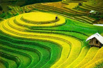 Đền Hùng - Mù Cang Chải - Điện Biên - Sơn La - Mộc Châu (Mùa Lúa Chín)