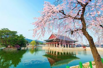 Những điều không nên làm khi du lịch Hàn Quốc để có chuyến đi trọn vẹn
