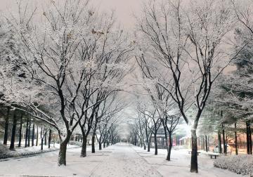 Lời hẹn ước mùa đông xứ Hàn, cùng đặt tour và trải nghiệm sự thú vị