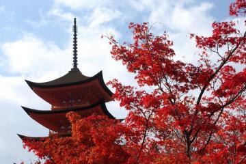 Du Lịch Ngắm Lá Đỏ Nhật Bản : HANEDA - IBARAKI - YAMANASHI - TOKYO