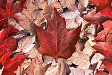 Mùa Thu Canada : Montreal - Quebec - Vancouver - Victoria