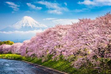 Tokyo – Kamakura - Núi Phú Sĩ - Yokohama – Narita