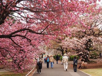 Chạm tay vào ước mơ ngắm hoa anh đào, đơn giản với tour Hàn Quốc 5 ngày 4 đêm
