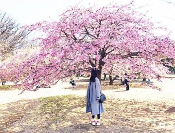 Bạn nên du lịch Nhật Bản mùa nào đẹp nhất?