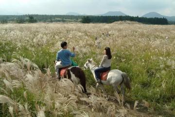 Thiên đường nghỉ dưỡng tuyệt vời cho khách du lịch tại đảo Jeju