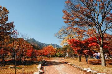Mãn nhãn ngắm mùa lá đỏ dịp thu về tại xứ sở kim chi