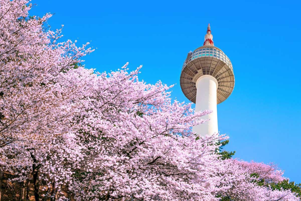 Du Lịch Hàn Quốc 2020(Mới) SEOUL – ARA WATERWAY – ĐẢO NAMI  EVERLAND – HOÀNG CUNG(5N4Đ)