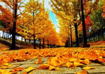 Chu du mùa thu Hàn Quốc đi 1 lần thương nhớ cả đời
