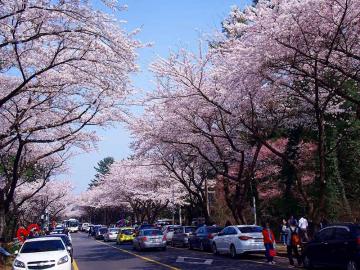 Top 5 lễ hội tại Hàn Quốc bạn không nên bỏ qua khi đến Hàn Quốc