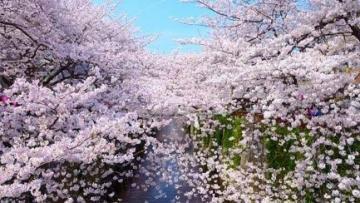 NGÀY 4 (03/04): KANAZAWA - SHIRAKAWAGO - TAKAYAMA - NAGOYA
